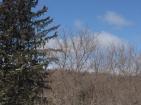 Spring treetops