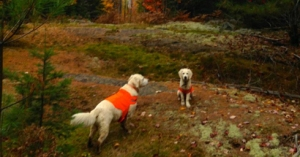 dogs reflec