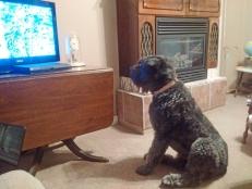 corona watch TV
